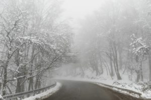 foggy road surrounded with snowy trees